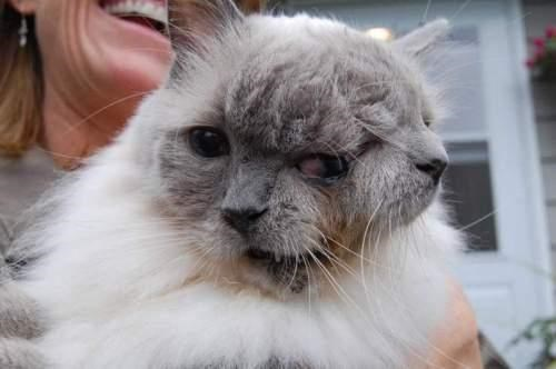 Two-Faced Feline of the Day