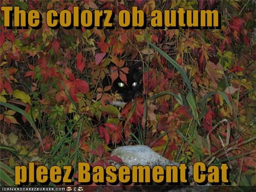 The colorz ob autum  pleez Basement Cat