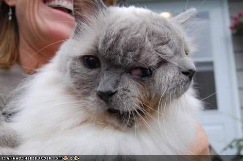 Frank and Louie: The World's Longest Living Janus Cat