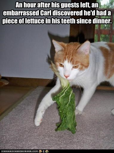 after,caption,captioned,cat,dinner,discovery,embarrassed,hour,lettuce,oops,realization,stuck,tabby,teeth