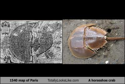 animal,city map,classics,horseshoe crab,map,paris