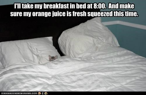 bed,breakfast,caption,captioned,cat,fresh,in,orange juice,preference,request,squeezed,take,this,time