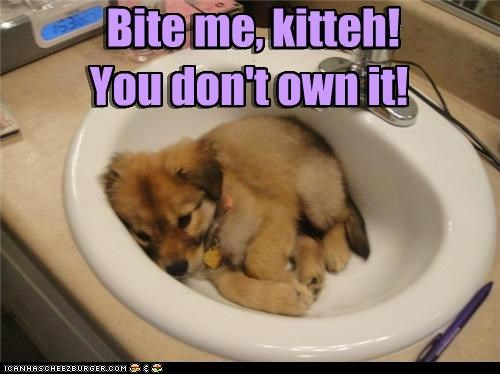 bite me,dog in sink,puppy,resting,silly dog,sink,whatbreed