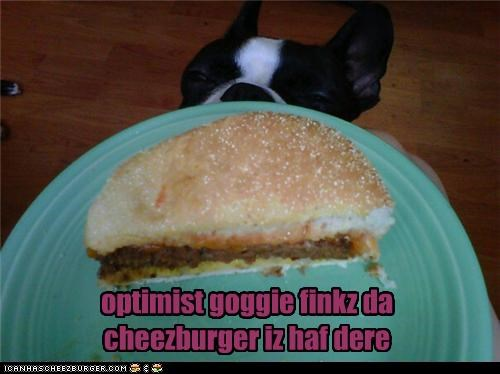 boston terrier,cheesburger,glass half full,optimist,optimistic