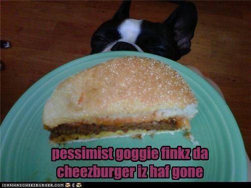boston terrier,cheeseburger,food,noms,people food,pessimist,pessimistic