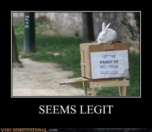 animals,bunny,fortune teller,hilarious,seems legit,wtf