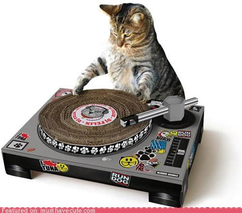 best of the week,Cats,cute,scratching post,stickers,turntable