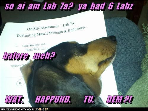 so  ai  am  Lab  7a?   ya  had  6  Labz  bafore   meh?   WAT.       HAPPUND.       TU.       DEM ?!