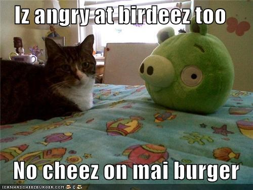 Iz angry at birdeez too  No cheez on mai burger