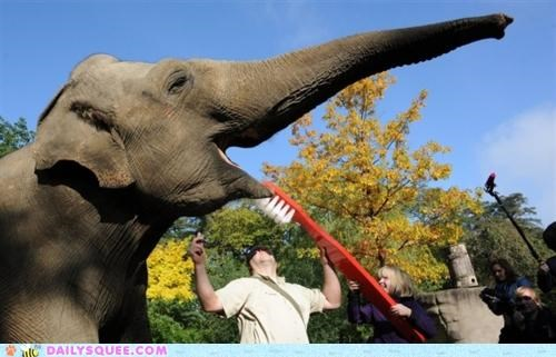 acting like animals,brushing,elephant,flossing,giant,hygiene,lolwut,nice,regiment,smile,teeth,toothbrush