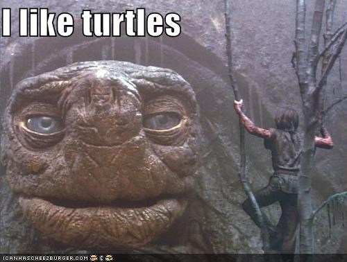 Everyone on the Internet Likes Turtles