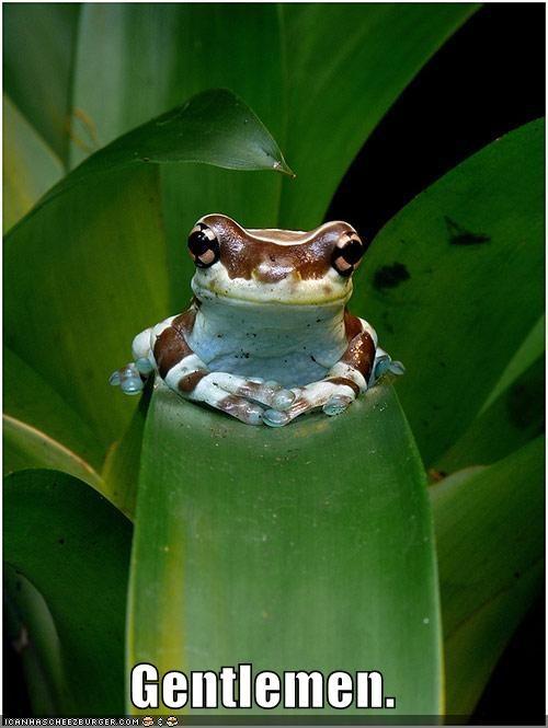 boss,frog,gentlemen,job,leaf,leaves,official