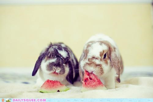 bunnies,bunny,celebration,exchange,gift,Hall of Fame,happy bunday,nomming,noms,payment,provided,rabbit,rabbits,watermelon