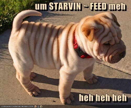 um STARVIN ~ FEED meh   heh heh heh