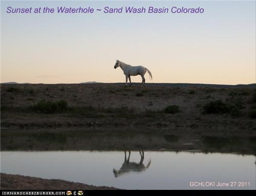 Sunset at the Waterhole ~ Sand Wash Basin Colorado