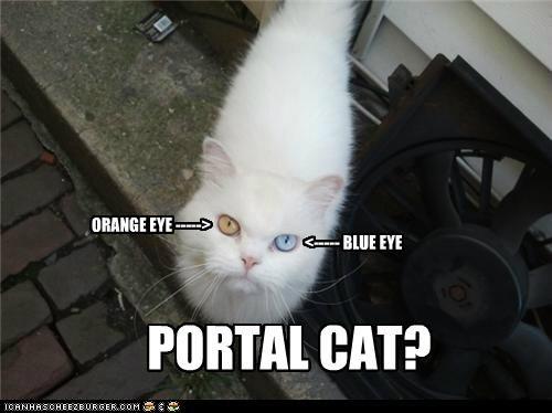 blue,caption,captioned,cat,colors,eye,eyes,orange,Portal