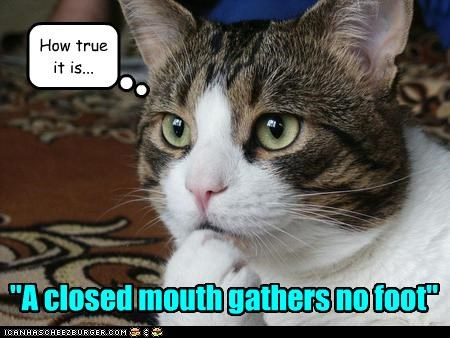 Kitteh reflects upon a Great Truth