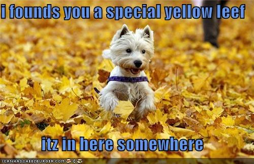 autumn,fall,happy dog,leaves,running,west highland white terrier,yellow leaf