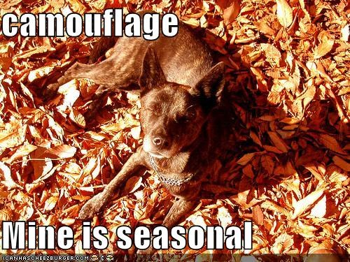 camouflage  Mine is seasonal