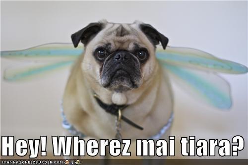 Hey! Wherez mai tiara?