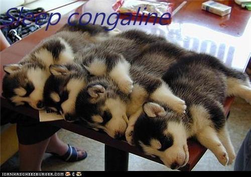 Sleep congaline