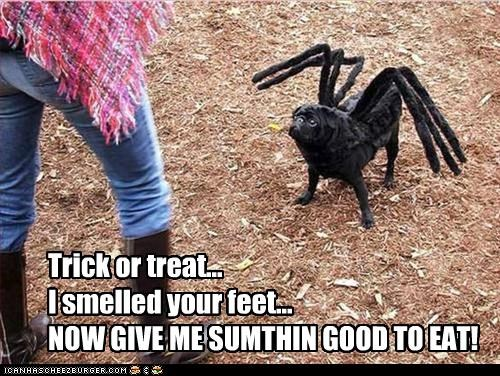 costume,dress up,give me something good to eat,halloween,howl-o-ween,pug,smell my feet,spider,trick or treat