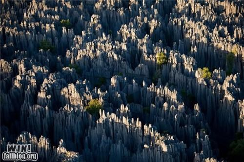 Mother Nature FTW: Madagascar's Stone Forest