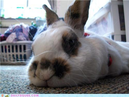 afraid,bunny,camera,close up,flash,happy bunday,lucky,posing,rabbit,reader squees,timid