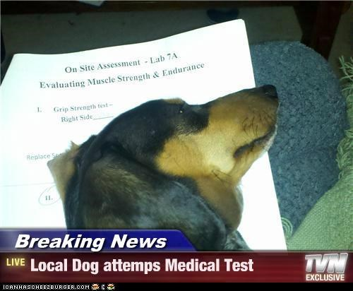Breaking News - Local Dog attemps Medical Test