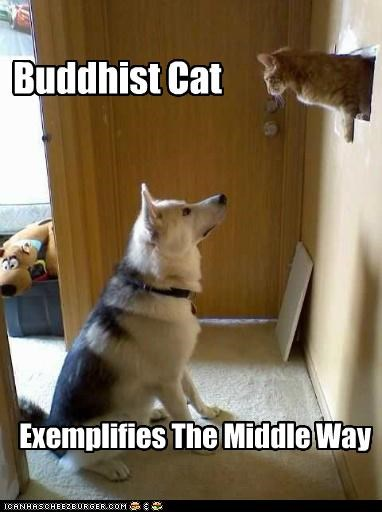 Buddhist Cat