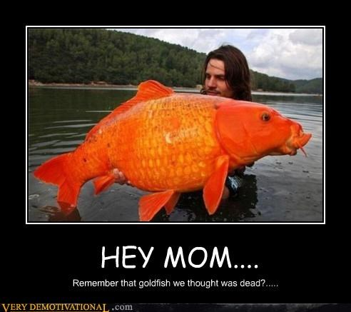 creepy,dead,goldfish,hilarious,huge