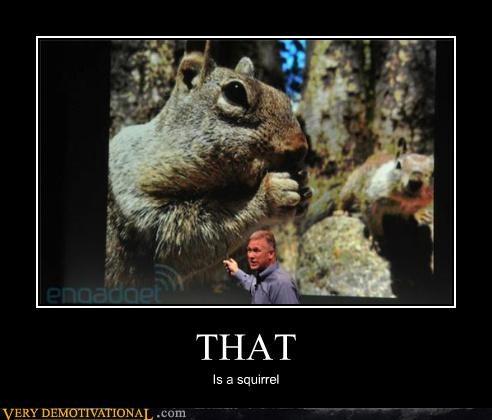 captain obvious,hilarious,ridiculous,squirrel