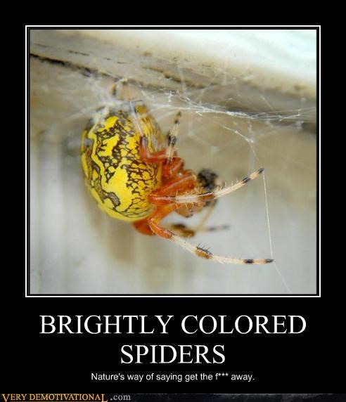 BRIGHTLY COLORED SPIDERS