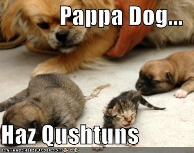 Pappa Dog...  Haz Qushtuns