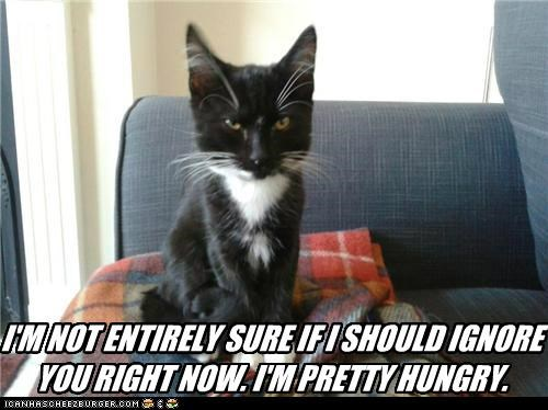 I'M NOT ENTIRELY SURE IF I SHOULD IGNORE YOU RIGHT NOW. I'M PRETTY HUNGRY.