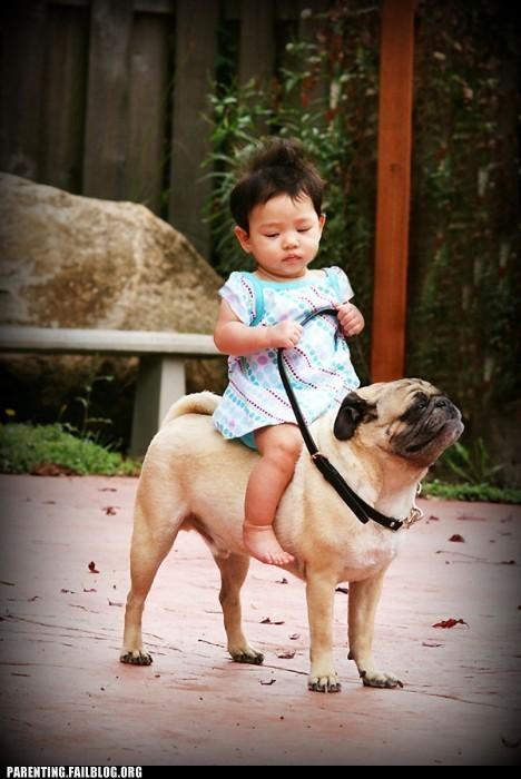 dogs,mount,Parenting Fail,parenting WIN,pet,pug,ride,shadowfax