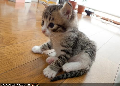 Cyoot Kitteh of teh Day: Sit and Be Fit