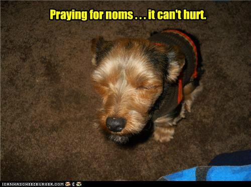 Praying for noms . . . it can't hurt.