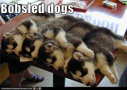 Bobsled dogs
