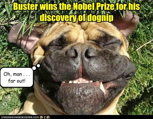 Buster wins the Nobel Prize for his discovery of dognip
