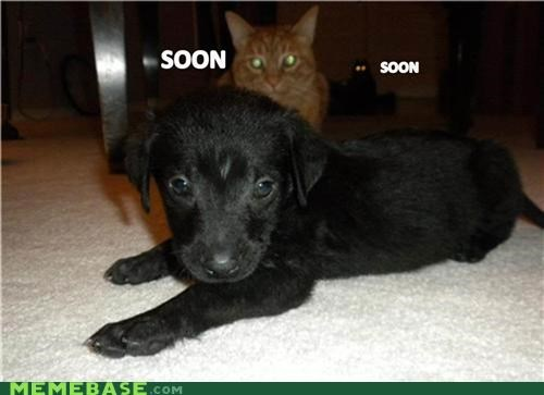 animemes,cat,cute,dogs,puns,SOON,too,two