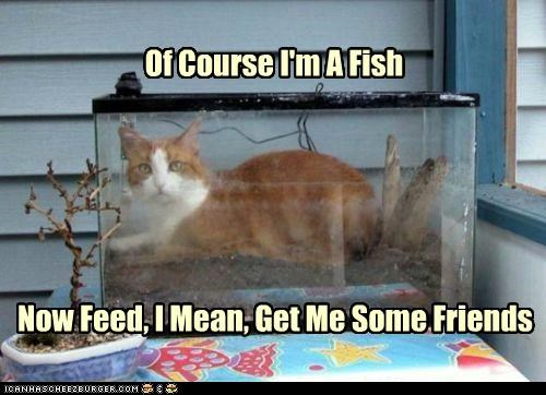 aquarium,bring,caption,captioned,cat,correction,feed,fish,fish tank,friends,get,i am,now,of course,pretending,reassurance,reassuring,request