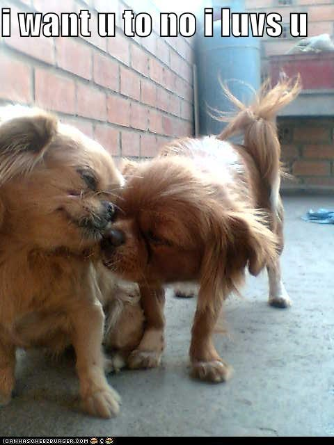 adorbz,awww,cavalier king charles spaniel,friends,friendship,i love you,love