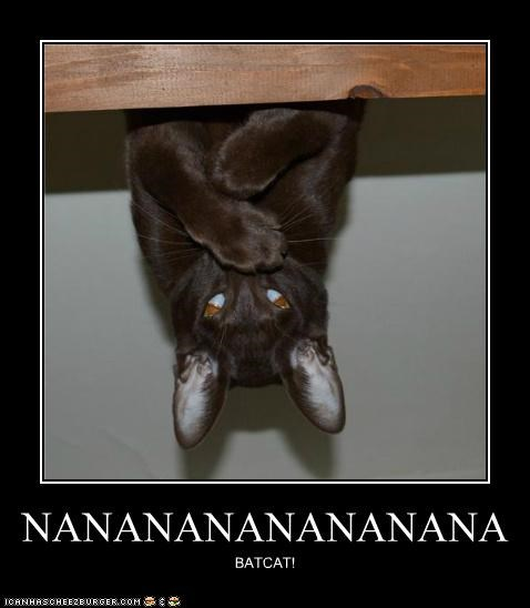 bat,batman,best of the week,caption,Cats,Hall of Fame,sound,Theme Song,upside down