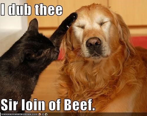 Beef,caption,captioned,cat,dogs,dub,golden retriever,knighting,loin,pun,sir,sirloin,thee