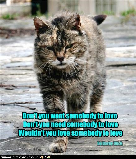 Adopt an older cat