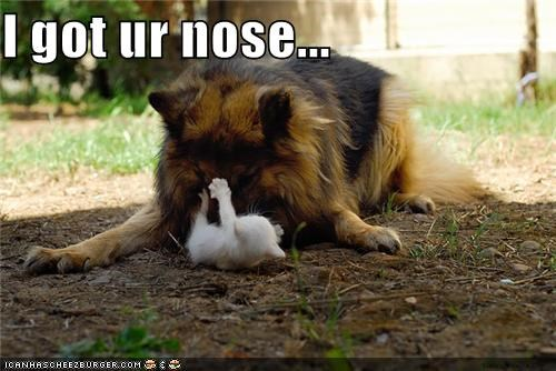 adorbz,awww,boop-nose,cat,friends,friendship,kitten,play,playing,whatbreed