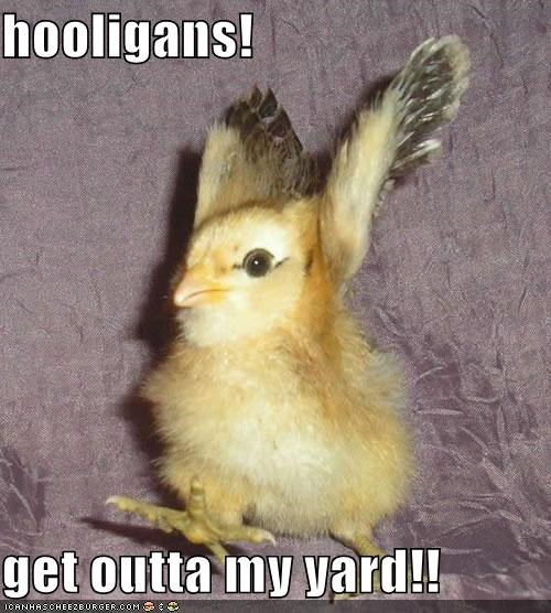 arms up,baby bird,chick,get off my lawn,get out of my yard,get outta here,go away,hooligans,running