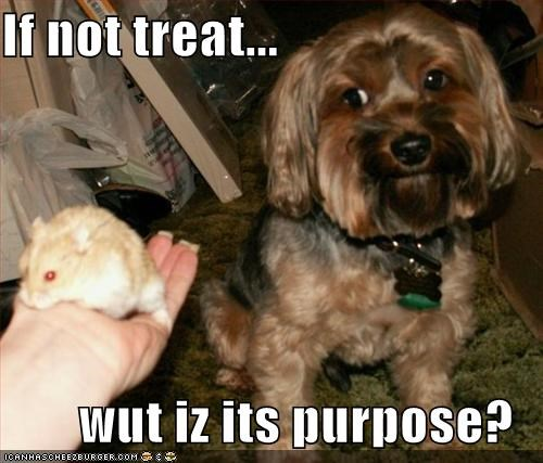 If not treat...  wut iz its purpose?