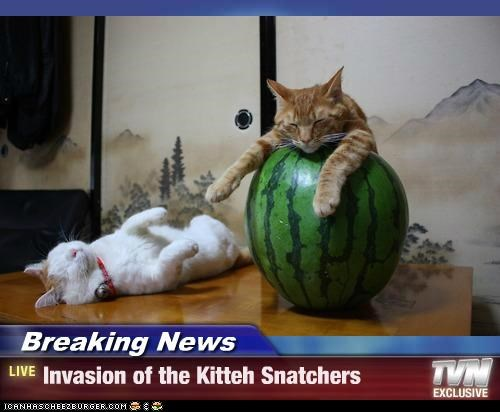 Breaking News - Invasion of the Kitteh Snatchers